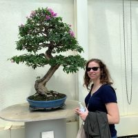 Autumn and the bougainvillea bonsai
